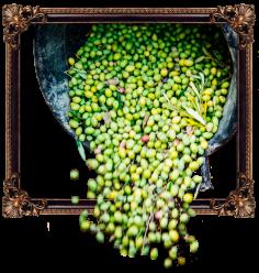 olivebasketframe-iffco-olive-oil
