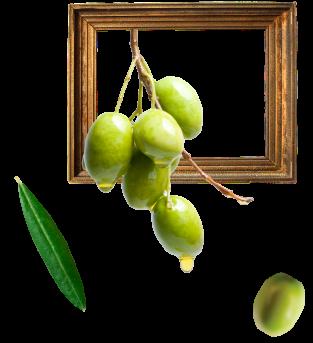 olivefruitframe-iffco-olive-oil