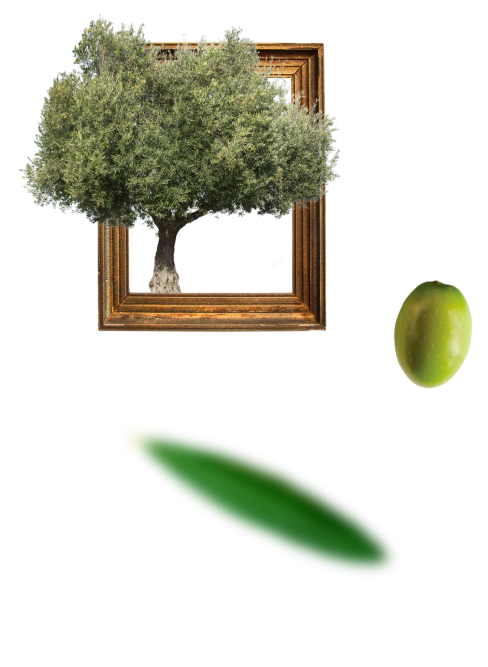 olivetreeframe-iffco-olive-oil